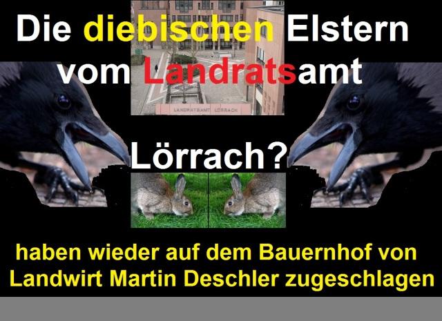 Die diebischen Elstern vom Landratsamt Lörrach
