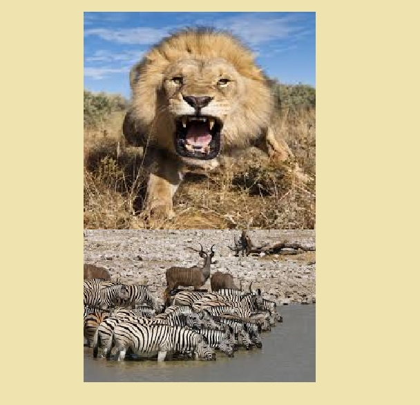 Waterhole Lion + Animals