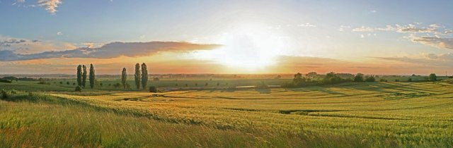 Getreidefelder_1150