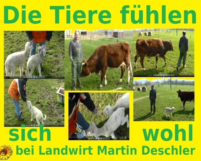 Landwirt Deschlers Tiere fühlen sich wohl