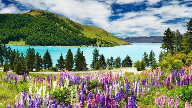 landscape-floral-peaceful-nature-scenic-spring-tree-mountains-sky-lovely-flower-clouds-grass-lake-wallpapers-lavender-mountain