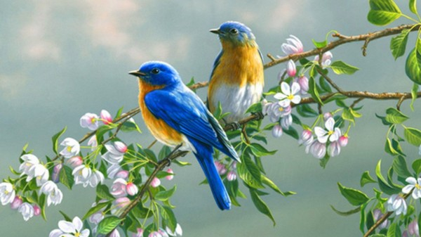birds-wallpaper-1366x768_birds_branches__blossoms-600x337