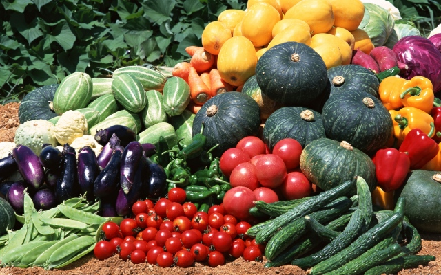 cucumbers_tomatoes_squash_vegetables_wallpaper
